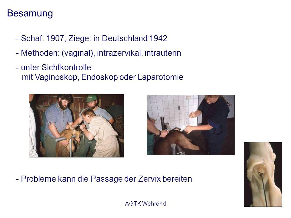 AGTK Wehrend Besamung - Schaf: 1907; Ziege: in Deutschland 1942 - Methoden: (vaginal), intrazervikal, intrauterin - unter Sichtkontrolle: mit Vaginosk