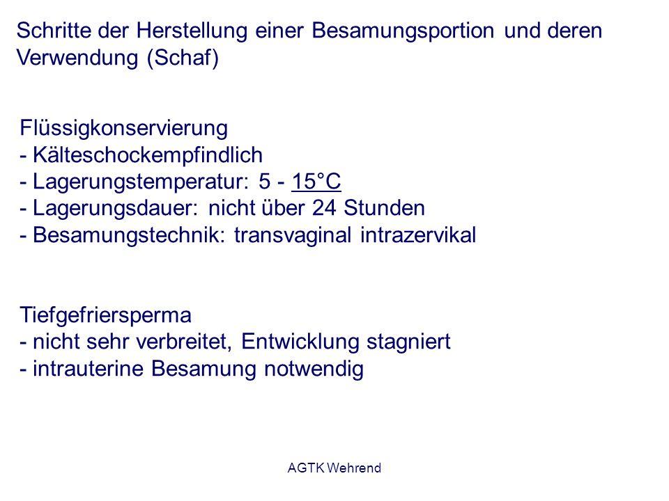 AGTK Wehrend Schritte der Herstellung einer Besamungsportion und deren Verwendung (Schaf) Flüssigkonservierung - Kälteschockempfindlich - Lagerungstem