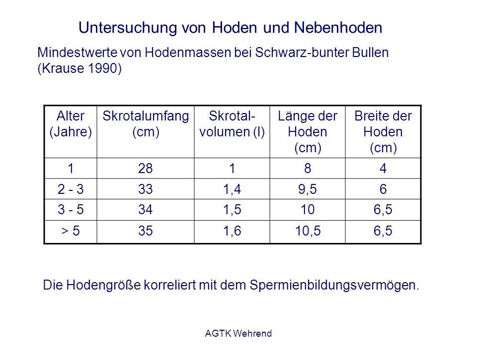 AGTK Wehrend Untersuchung von Hoden und Nebenhoden Die Hodengröße korreliert mit dem Spermienbildungsvermögen. Alter (Jahre) Skrotalumfang (cm) Skrota