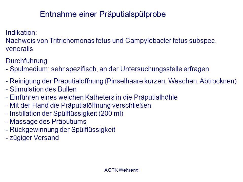 AGTK Wehrend Entnahme einer Präputialspülprobe Indikation: Nachweis von Tritrichomonas fetus und Campylobacter fetus subspec. veneralis Durchführung -