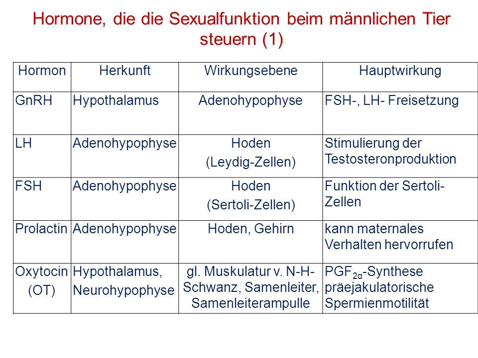 Hormon HerkunftWirkungsgewebeHauptwirkung Estradiol (E 2 )Sertoli-ZellenGehirnSexualverhalten Testosteron (T) Leydig-ZellenAnhangdrüsen, Tunica dartus, Hodenparenchym, Skelettmuskulatur Wachstum, fördert Spermatogenese und Anhangdrüsensekretion InhibinSertoli-ZellenGonadotropine der Hypophyse hemmt FSH-Sekretion Prostaglandine (PGF 2α ) Samenblasen- drüse Nebenhodenmetabolische Spermienaktivität, NH-Kontraktion Hormone, die die Sexualfunktion beim männlichen Tier steuern (2)