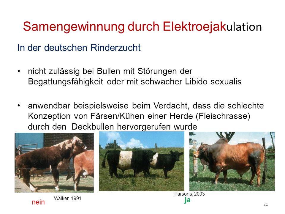 Samengewinnung durch Elektroejak ulation In der deutschen Rinderzucht nicht zulässig bei Bullen mit Störungen der Begattungsfähigkeit oder mit schwacher Libido sexualis anwendbar beispielsweise beim Verdacht, dass die schlechte Konzeption von Färsen/Kühen einer Herde (Fleischrasse) durch den Deckbullen hervorgerufen wurde nein ja 21 Parsons, 2003 Walker, 1991