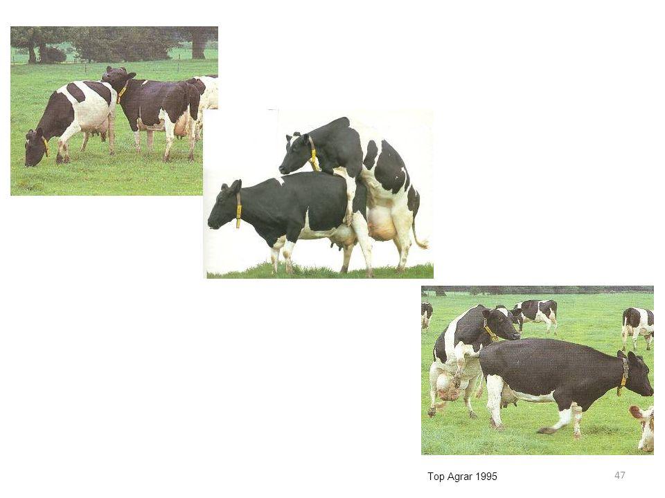 47 Top Agrar 1995