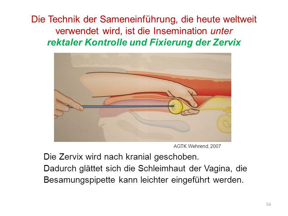 Die Technik der Sameneinführung, die heute weltweit verwendet wird, ist die Insemination unter rektaler Kontrolle und Fixierung der Zervix Die Zervix wird nach kranial geschoben.