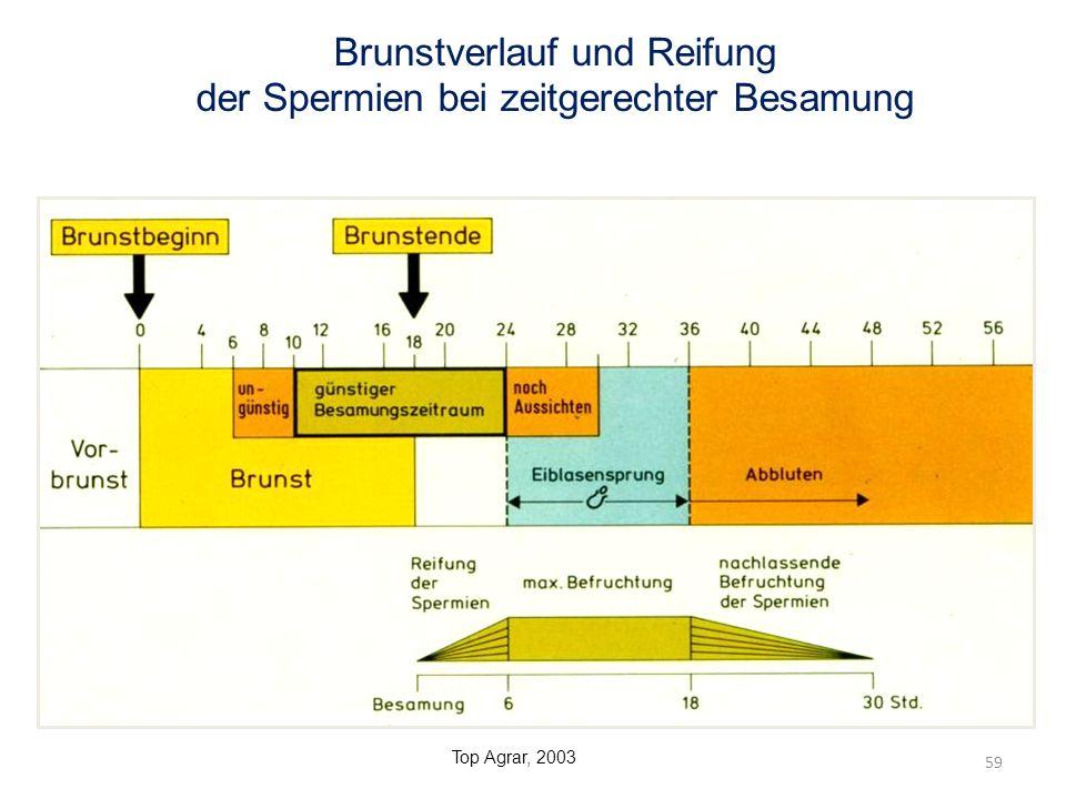 Brunstverlauf und Reifung der Spermien bei zeitgerechter Besamung 59 Top Agrar, 2003