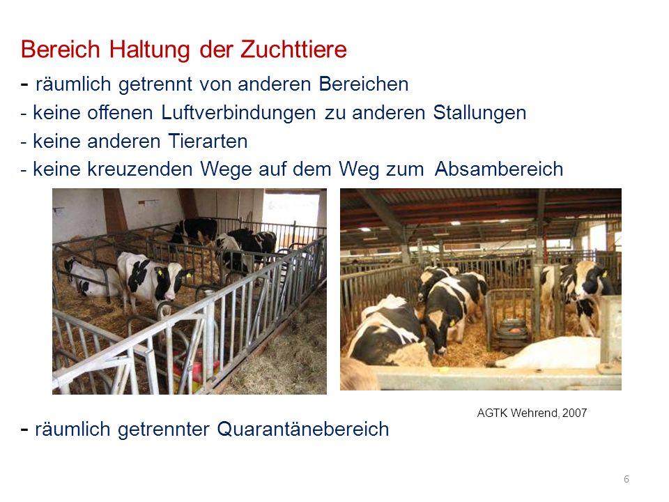 Bereich Haltung der Zuchttiere - räumlich getrennt von anderen Bereichen - keine offenen Luftverbindungen zu anderen Stallungen - keine anderen Tierarten - keine kreuzenden Wege auf dem Weg zum Absambereich - räumlich getrennter Quarantänebereich 6 AGTK Wehrend, 2007