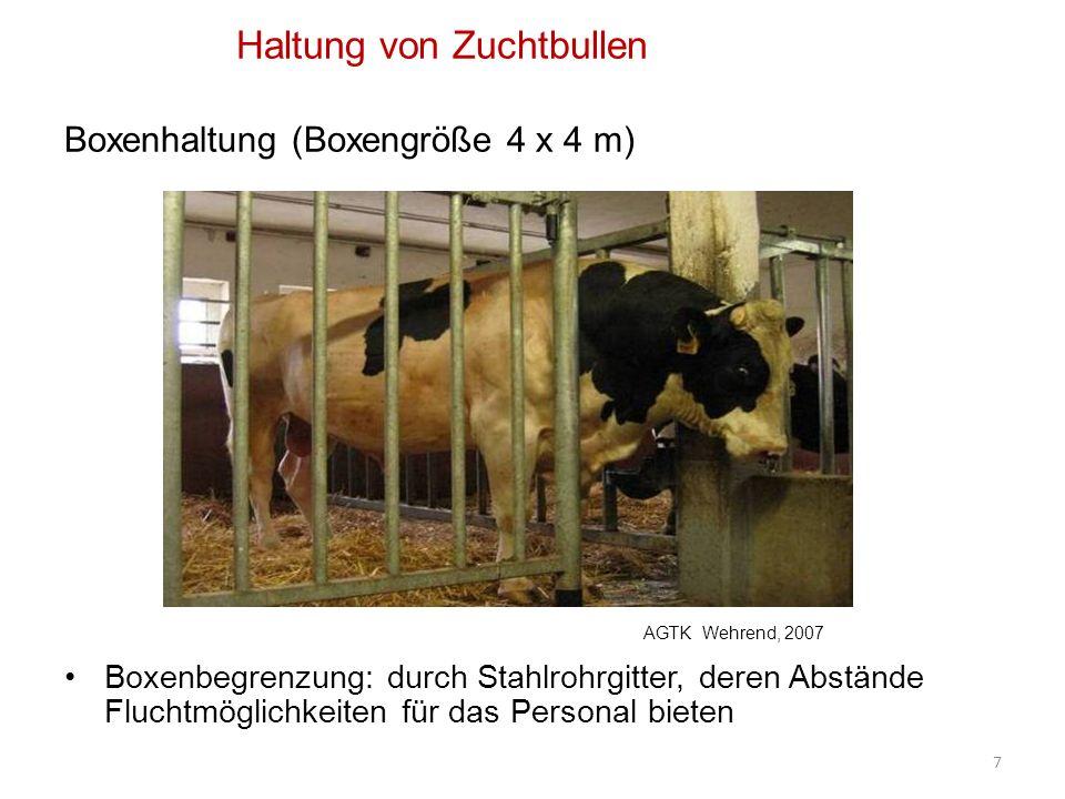 Haltung von Zuchtbullen Boxenhaltung (Boxengröße 4 x 4 m) Boxenbegrenzung: durch Stahlrohrgitter, deren Abstände Fluchtmöglichkeiten für das Personal bieten 7 AGTK Wehrend, 2007