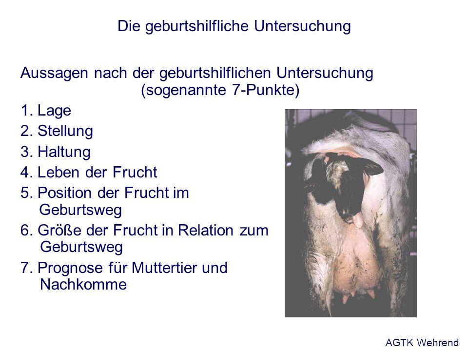 Die geburtshilfliche Untersuchung Aussagen nach der geburtshilflichen Untersuchung (sogenannte 7-Punkte) 1. Lage 2. Stellung 3. Haltung 4. Leben der F