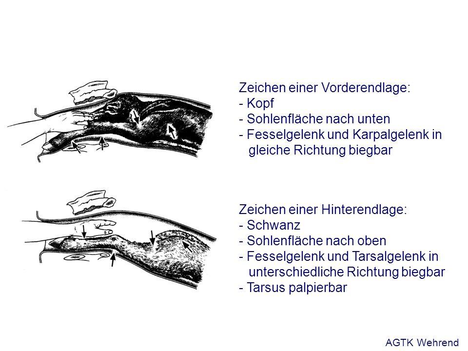 Zeichen einer Vorderendlage: - Kopf - Sohlenfläche nach unten - Fesselgelenk und Karpalgelenk in gleiche Richtung biegbar Zeichen einer Hinterendlage: