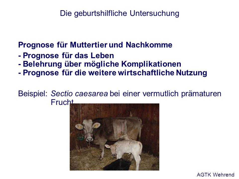 Die geburtshilfliche Untersuchung Prognose für Muttertier und Nachkomme - Prognose für das Leben - Belehrung über mögliche Komplikationen - Prognose f