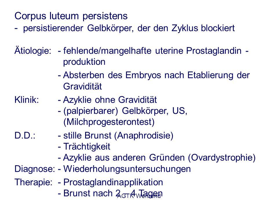 AGTK Wehrend Dystrophie der Ovarien (Atrophie) - funktionsfähige Ovarien haben ihre Funktion eingestellt - Ausdruck einer chronischen Mangelsituation oder von Stress (Hitzestress von DSB in heißen Entwicklungsländern) Klinik: - Azyklie ohne Gravidität - rektale Palpation/US: kleine Ovarien ohne Funktionsgebilde - abgemagerte, chronisch kranke Tiere Therapie: - häufig irreversibel - Bestandsanalyse - Ursache abstellen - alleinige Hormontherapie ist sinnlos