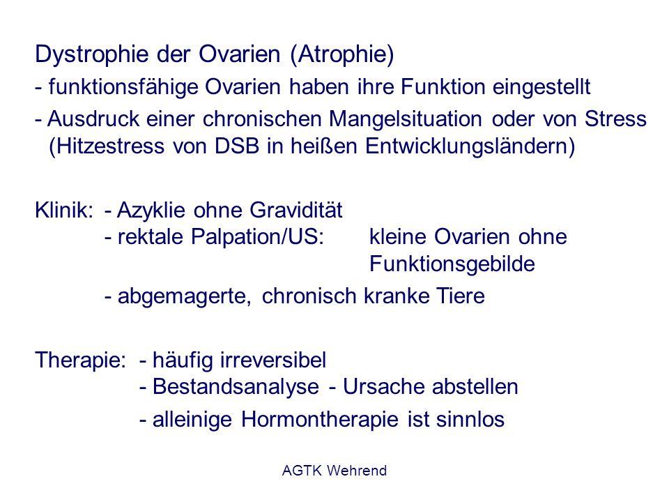 AGTK Wehrend Mögliche Ursachen der Ovardystrophie Sozialer Stress Wassermangel Lichtmangel Hohe Milchleistung Mängel im Kuhkomfort Fütterungsmängel Chronische Erkrankungen Ohne Bestandsanalyse ist eine befriedigende Problemlösung nicht möglich.