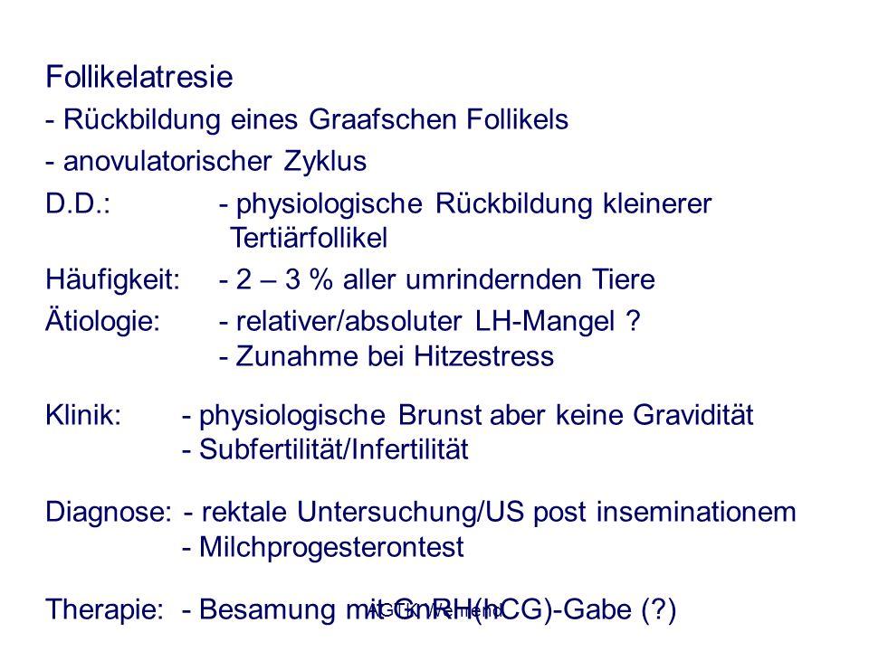 AGTK Wehrend Follikelatresie - Rückbildung eines Graafschen Follikels - anovulatorischer Zyklus D.D.: - physiologische Rückbildung kleinerer Tertiärfo