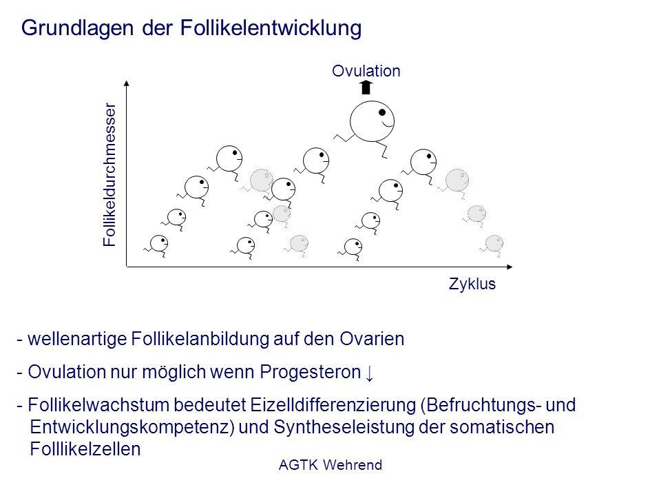 AGTK Wehrend Grundlagen der Follikelentwicklung - wellenartige Follikelanbildung auf den Ovarien - Ovulation nur möglich wenn Progesteron - Follikelwa