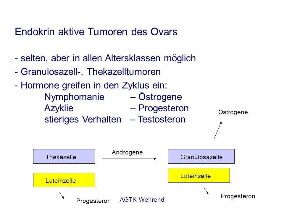 AGTK Wehrend Endokrin aktive Tumoren des Ovars - selten, aber in allen Altersklassen möglich -Granulosazell-, Thekazelltumoren - Hormone greifen in de