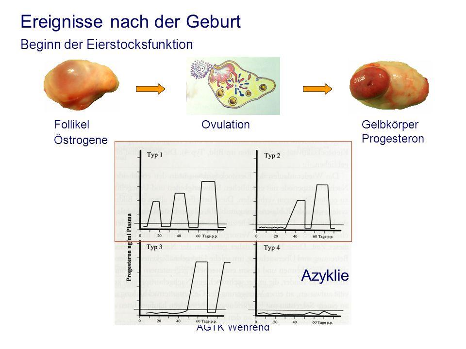 AGTK Wehrend Ereignisse nach der Geburt Beginn der Eierstocksfunktion Follikel Östrogene OvulationGelbkörper Progesteron Azyklie
