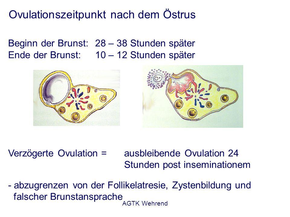 AGTK Wehrend Ovulationszeitpunkt nach dem Östrus Beginn der Brunst: 28 – 38 Stunden später Ende der Brunst:10 – 12 Stunden später Verzögerte Ovulation