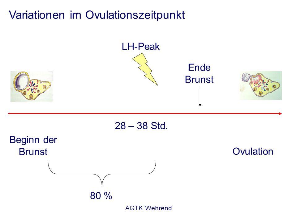 AGTK Wehrend Variationen im Ovulationszeitpunkt Beginn der Brunst Ende Brunst LH-Peak Ovulation 80 % 28 – 38 Std.