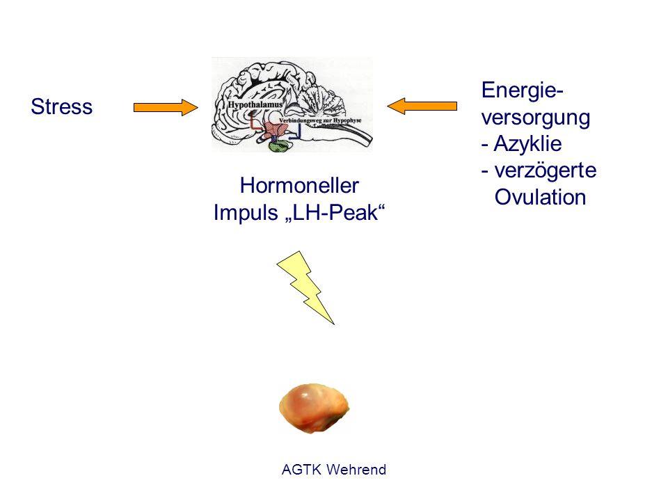 AGTK Wehrend Stress Hormoneller Impuls LH-Peak Energie- versorgung - Azyklie - verzögerte Ovulation