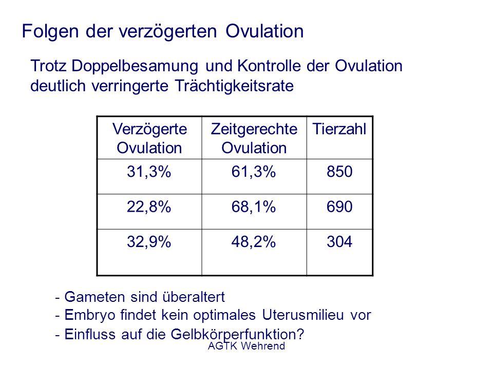 AGTK Wehrend Folgen der verzögerten Ovulation Trotz Doppelbesamung und Kontrolle der Ovulation deutlich verringerte Trächtigkeitsrate Verzögerte Ovula