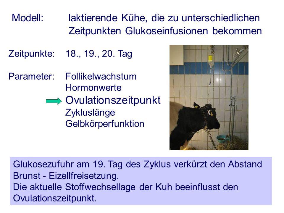 AGTK Wehrend Modell: laktierende Kühe, die zu unterschiedlichen Zeitpunkten Glukoseinfusionen bekommen Zeitpunkte:18., 19., 20. Tag Parameter: Follike