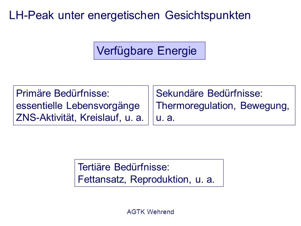 AGTK Wehrend LH-Peak unter energetischen Gesichtspunkten Verfügbare Energie Rezeptoren im Hirnstamm, die die Verfügbarkeit der Energie im Sinne laufender Oxidation wahrnehmen – Oxidation von Glukose Weiterleitung des Signals in den Hypothalamus Modulation der GnRH/LH- Freisetzung Daneben eine Reihe anderer Systeme (IGF, Insulin, u.a.) Wade u.