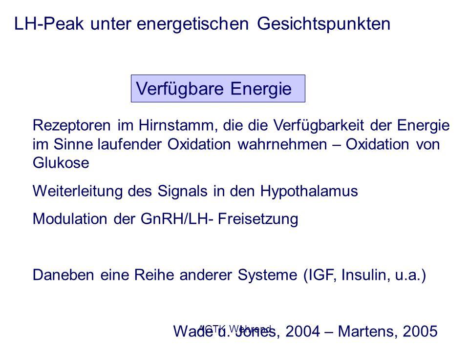 AGTK Wehrend LH-Peak unter energetischen Gesichtspunkten Verfügbare Energie Rezeptoren im Hirnstamm, die die Verfügbarkeit der Energie im Sinne laufen