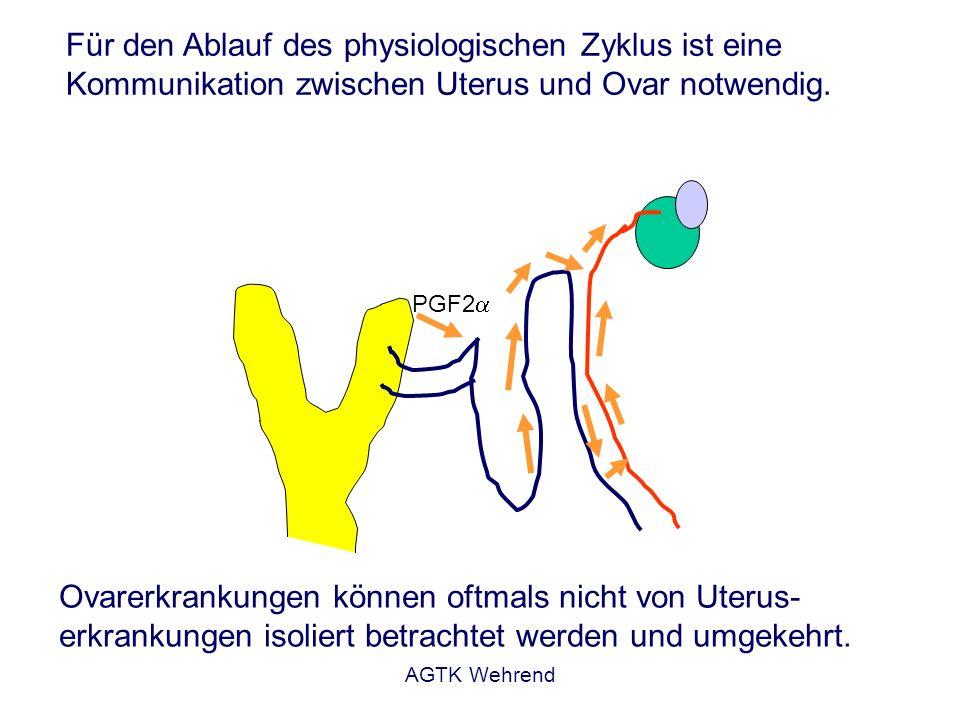 AGTK Wehrend Für den Ablauf des physiologischen Zyklus ist eine Kommunikation zwischen Uterus und Ovar notwendig. PGF2 Ovarerkrankungen können oftmals