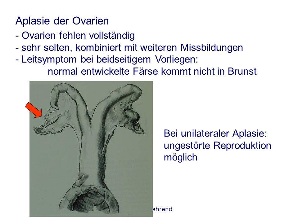 AGTK Wehrend Aplasie der Ovarien - Ovarien fehlen vollständig - sehr selten, kombiniert mit weiteren Missbildungen - Leitsymptom bei beidseitigem Vorl