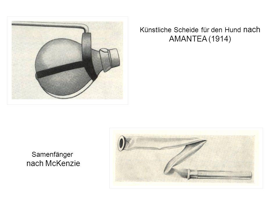 Künstliche Scheide für den Hund nach AMANTEA (1914) Samenfänger nach McKenzie