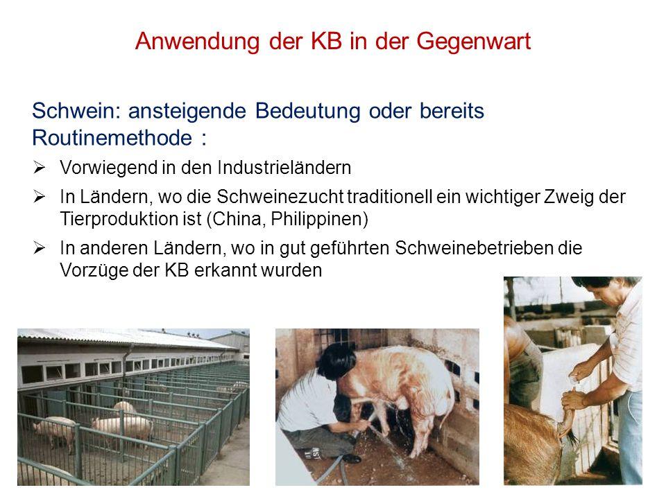 Anwendung der KB in der Gegenwart Schwein: ansteigende Bedeutung oder bereits Routinemethode : Vorwiegend in den Industrieländern In Ländern, wo die S