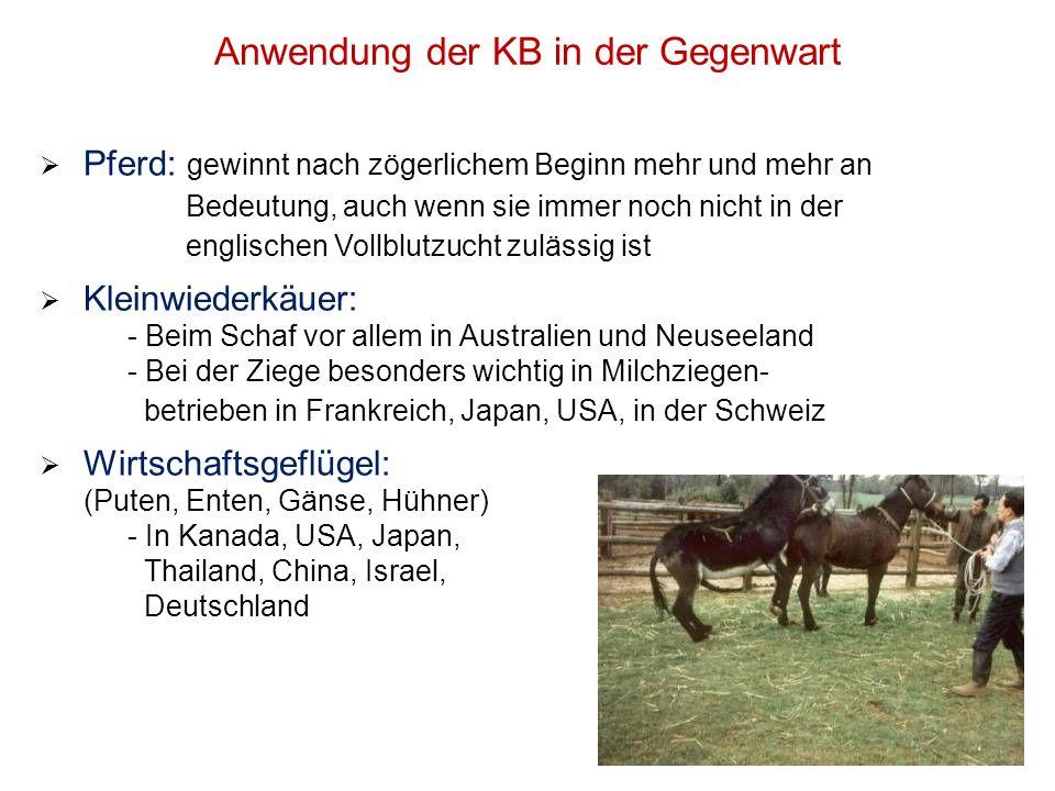Anwendung der KB in der Gegenwart Pferd: gewinnt nach zögerlichem Beginn mehr und mehr an Bedeutung, auch wenn sie immer noch nicht in der englischen