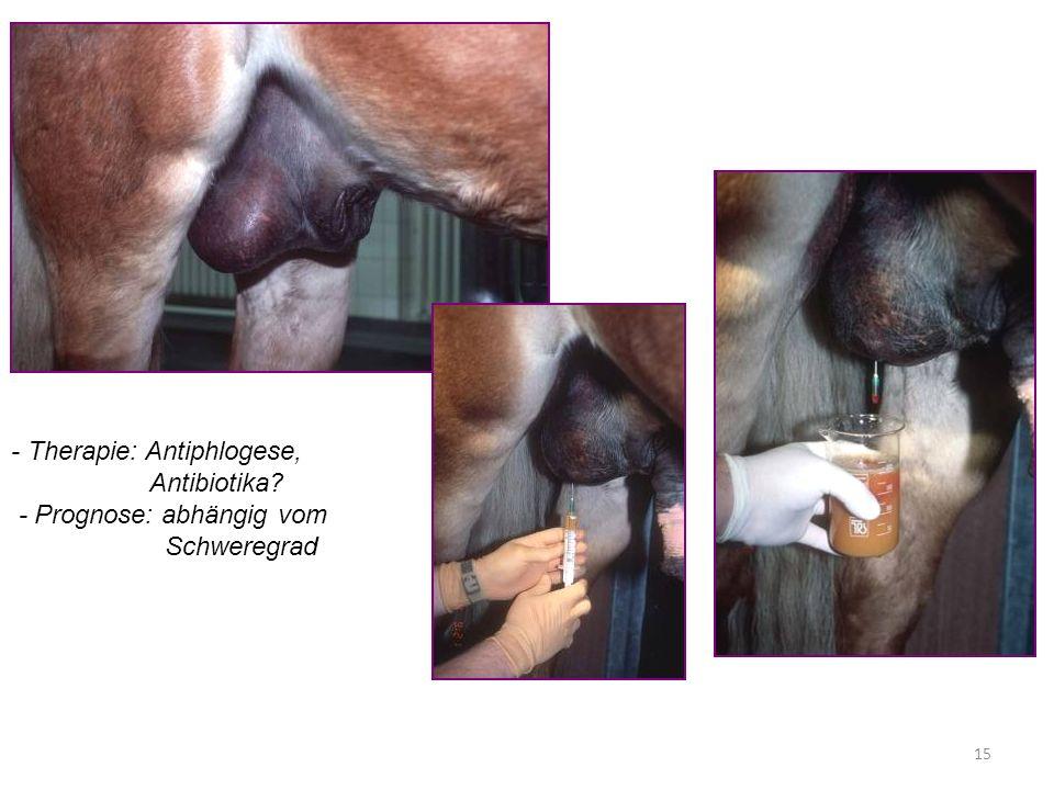 15 - Therapie: Antiphlogese, Antibiotika? - Prognose: abhängig vom Schweregrad