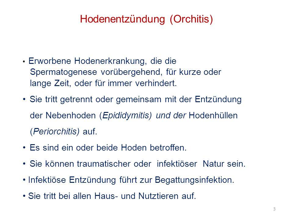 14 Hodenentzündung Differentialdiagnose Hodentumoren Hoden- bzw.