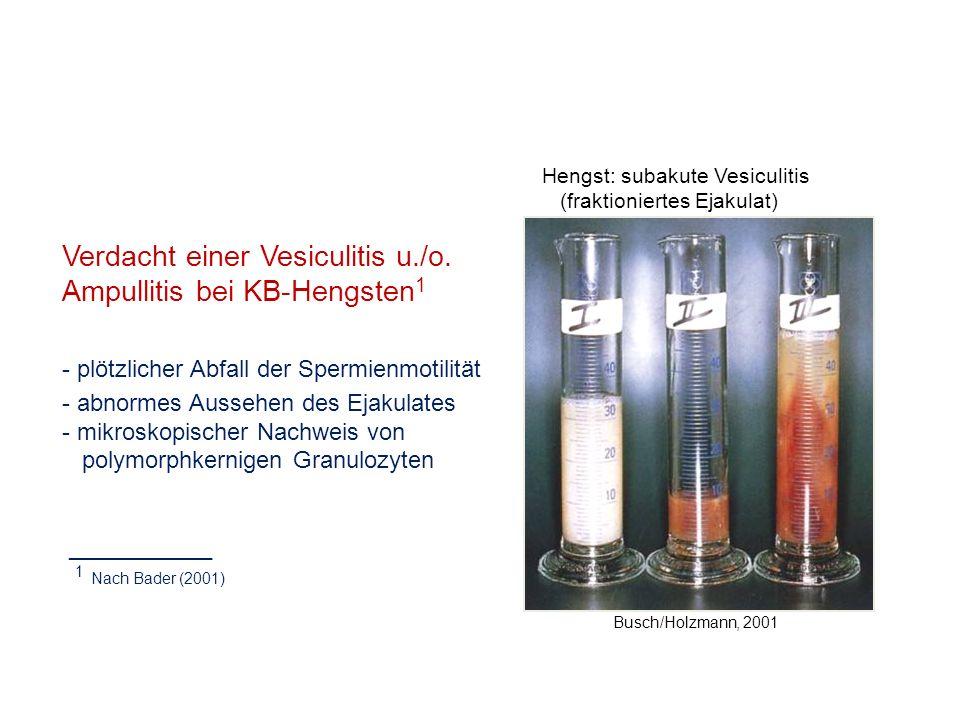 Busch/Holzmann, 2001 Hengst: subakute Vesiculitis (fraktioniertes Ejakulat) Verdacht einer Vesiculitis u./o. Ampullitis bei KB-Hengsten 1 - plötzliche