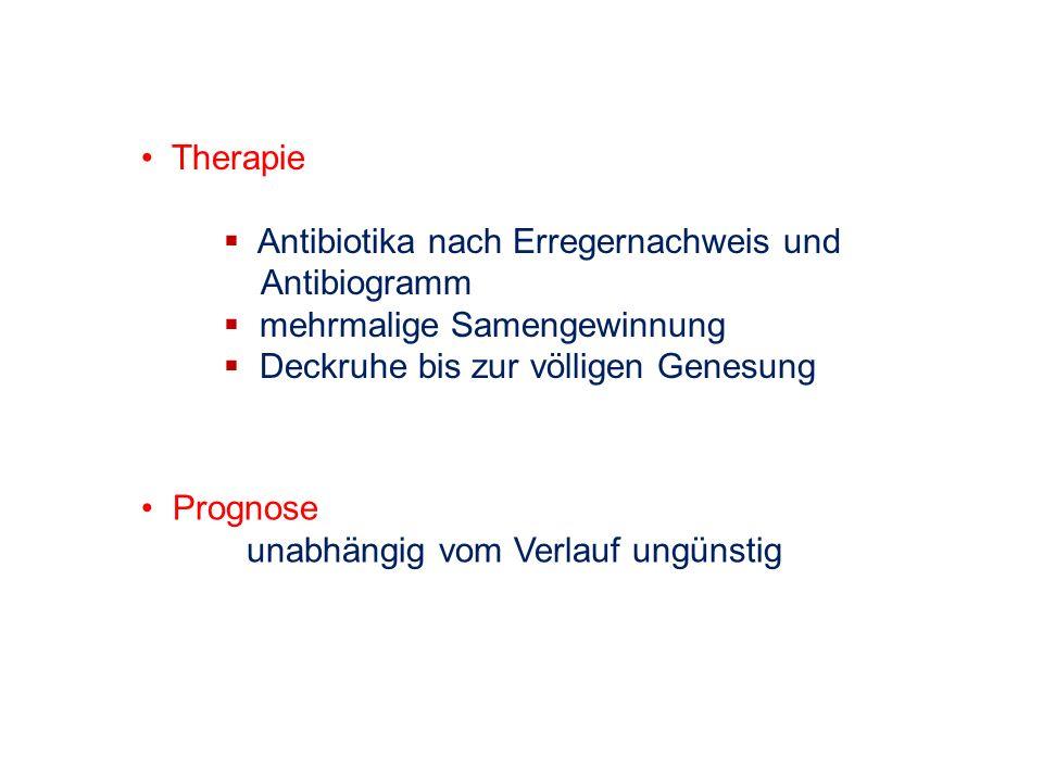 Therapie Antibiotika nach Erregernachweis und Antibiogramm mehrmalige Samengewinnung Deckruhe bis zur völligen Genesung Prognose unabhängig vom Verlau