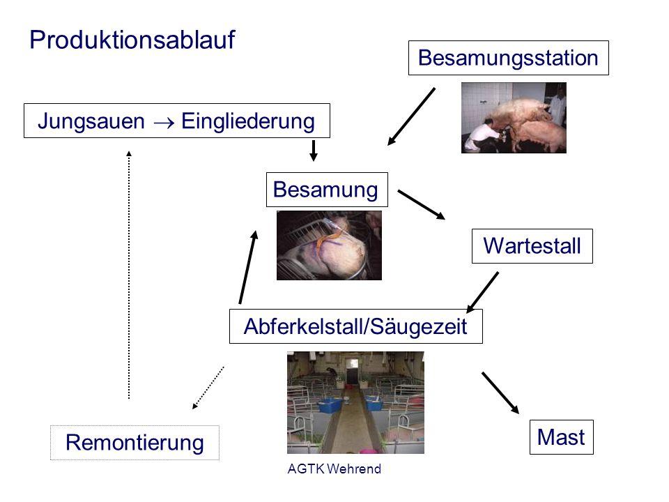 AGTK Wehrend Produktionsablauf Jungsauen Eingliederung Besamung Wartestall Abferkelstall/Säugezeit Mast Remontierung Besamungsstation