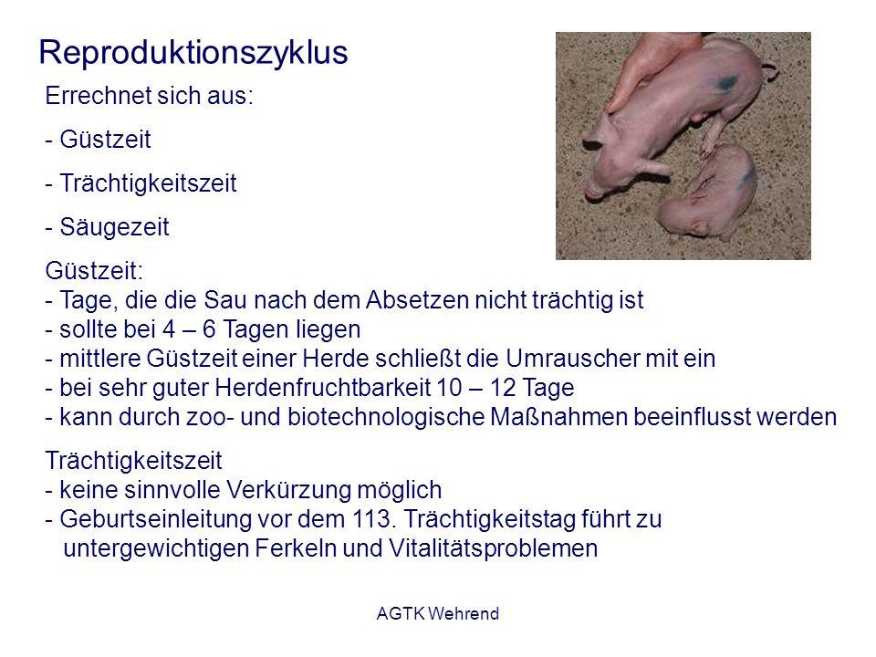AGTK Wehrend Reproduktionszyklus Errechnet sich aus: - Güstzeit - Trächtigkeitszeit - Säugezeit Güstzeit: - Tage, die die Sau nach dem Absetzen nicht