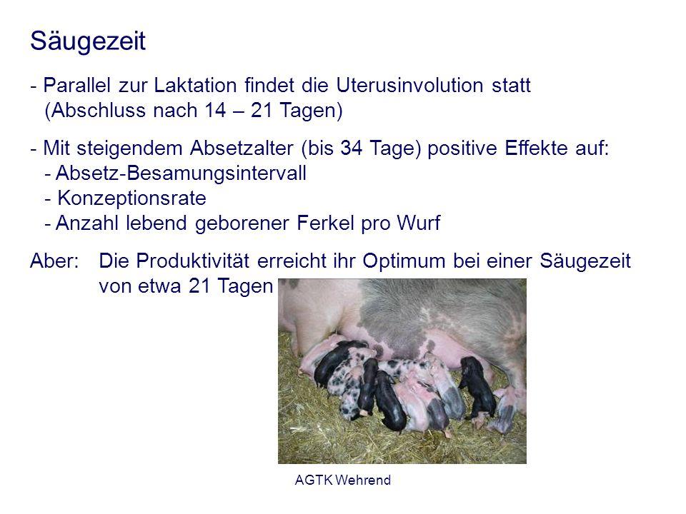 AGTK Wehrend Säugezeit - Parallel zur Laktation findet die Uterusinvolution statt (Abschluss nach 14 – 21 Tagen) - Mit steigendem Absetzalter (bis 34