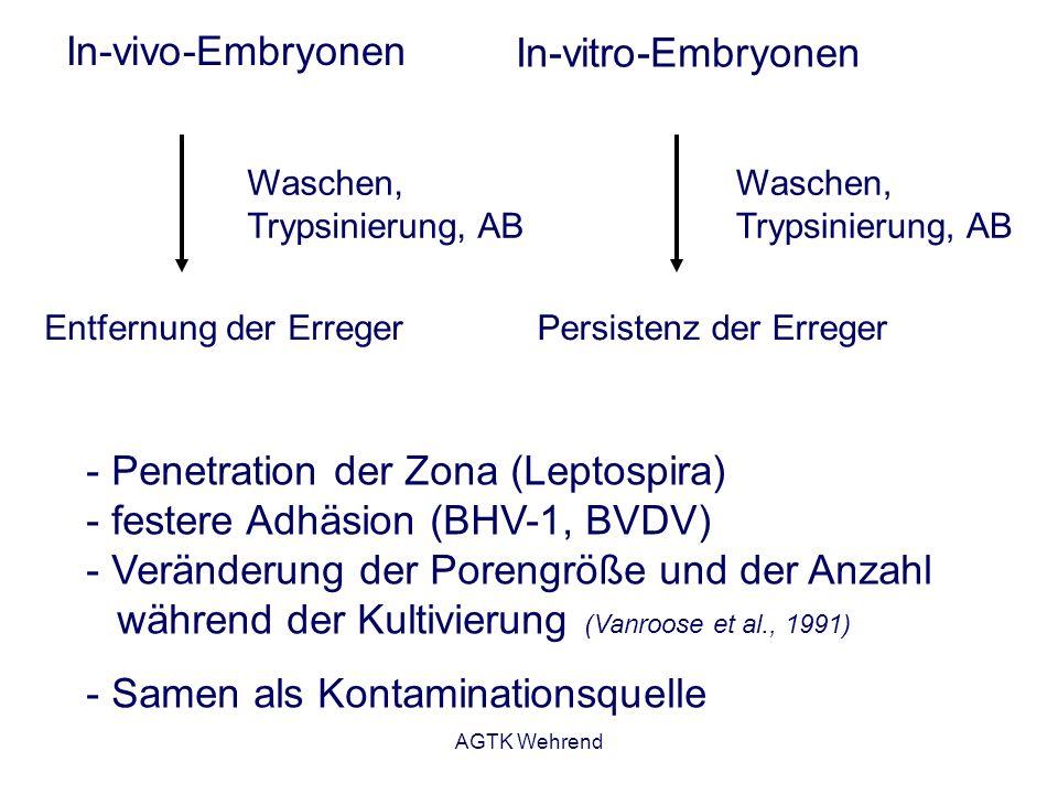 AGTK Wehrend - Penetration der Zona (Leptospira) - festere Adhäsion (BHV-1, BVDV) - Veränderung der Porengröße und der Anzahl während der Kultivierung