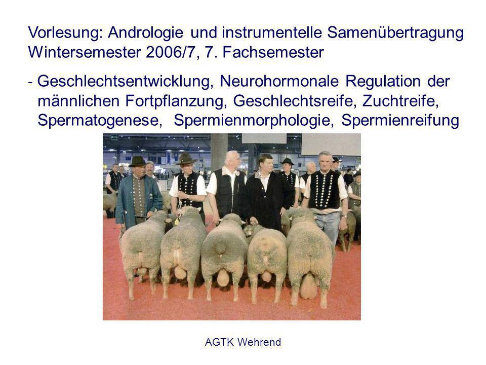 AGTK Wehrend Energiestoffwechsel der Spermien - speziesspezifische Besonderheiten - Unterschiede im Sauerstoffbedarf beim Schwein: kaum anaerobe Glykolyse, daher schnell Abfall der Bewegungsaktivität bei der Motilitätsbeurteilung