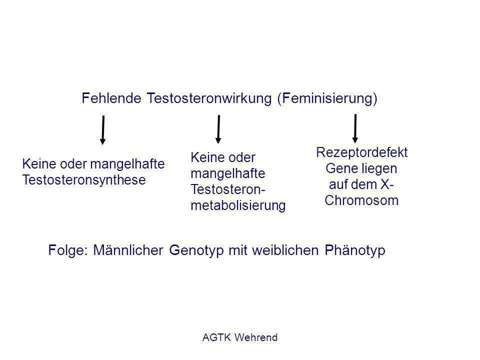 AGTK Wehrend Fehlende Testosteronwirkung (Feminisierung) Keine oder mangelhafte Testosteronsynthese Keine oder mangelhafte Testosteron- metabolisierung Rezeptordefekt Gene liegen auf dem X- Chromosom Folge: Männlicher Genotyp mit weiblichen Phänotyp