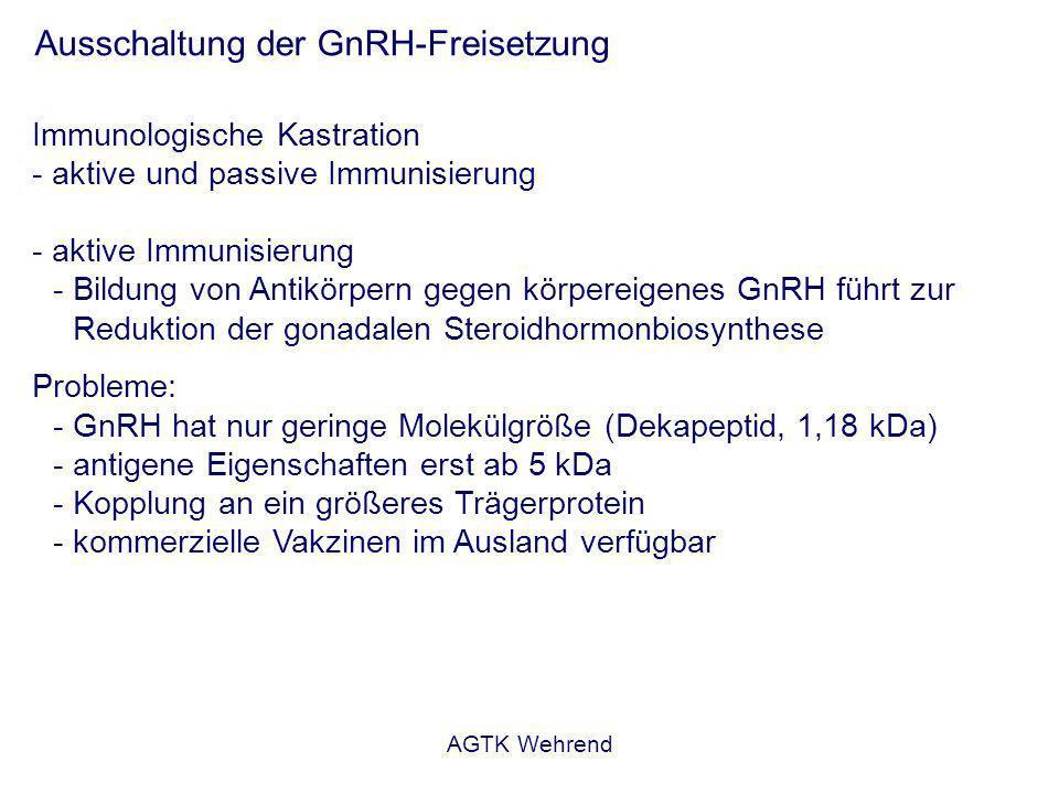 AGTK Wehrend Ausschaltung der GnRH-Freisetzung Immunologische Kastration - aktive und passive Immunisierung - aktive Immunisierung - Bildung von Antikörpern gegen körpereigenes GnRH führt zur Reduktion der gonadalen Steroidhormonbiosynthese Probleme: - GnRH hat nur geringe Molekülgröße (Dekapeptid, 1,18 kDa) - antigene Eigenschaften erst ab 5 kDa - Kopplung an ein größeres Trägerprotein - kommerzielle Vakzinen im Ausland verfügbar