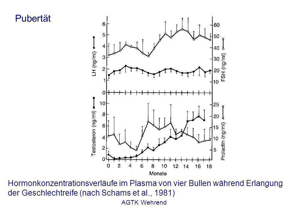 AGTK Wehrend Pubertät Hormonkonzentrationsverläufe im Plasma von vier Bullen während Erlangung der Geschlechtreife (nach Schams et al., 1981)