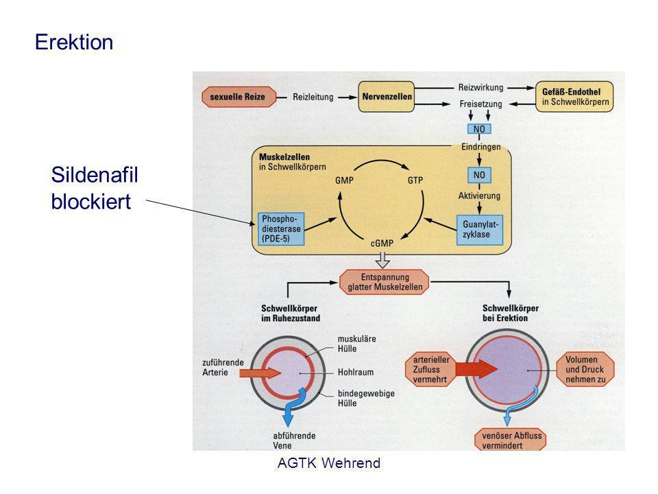 AGTK Wehrend Erektion Sildenafil blockiert