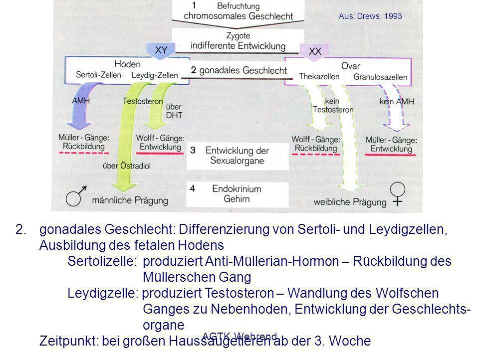 AGTK Wehrend Spermientransport - passiv durch Uteruskontraktionen - aktiv durch Eigenbewegungen der Samenzellen - während des Transportes in die Spermienspeicher kommt es zum Verlust und zur Selektion - mechanische Barrieren - retrograder Transport - Phagozytose durch einwandernde Leukozyten Hunter und Greve, 1998