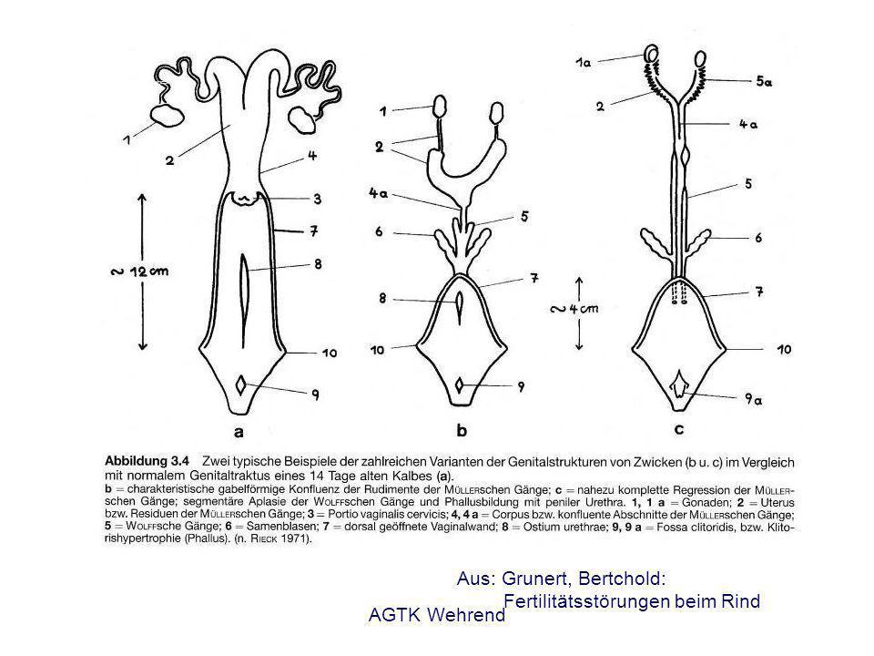 AGTK Wehrend Vorgänge nach der Spermiation - Transport in den Nebenhoden - Nebenhodenreifung - Ejakulation - Spermiendeponierung - Spermientransport - Spermienselektion - Kapazitation - Befruchtungskaskade siehe Vorlesung: Fortpflanzung 5.