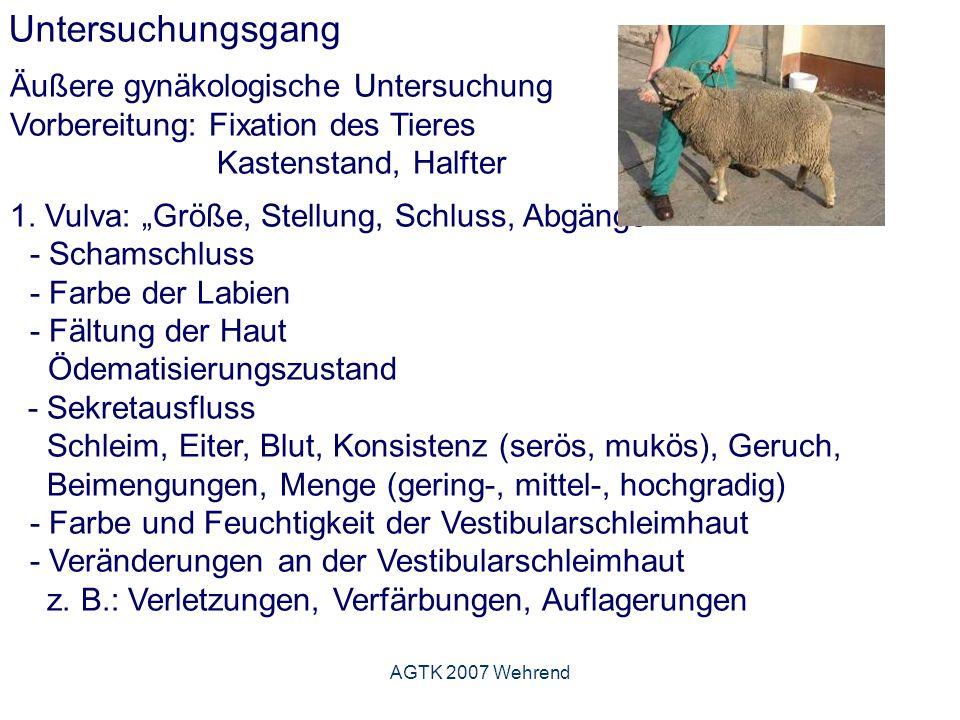 AGTK 2007 Wehrend Untersuchungsgang Äußere gynäkologische Untersuchung Vorbereitung: Fixation des Tieres Kastenstand, Halfter 1.