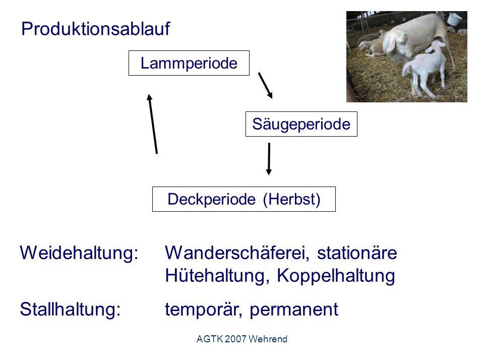 AGTK 2007 Wehrend Produktionsablauf Lammperiode Säugeperiode Deckperiode (Herbst) Weidehaltung: Wanderschäferei, stationäre Hütehaltung, Koppelhaltung Stallhaltung: temporär, permanent