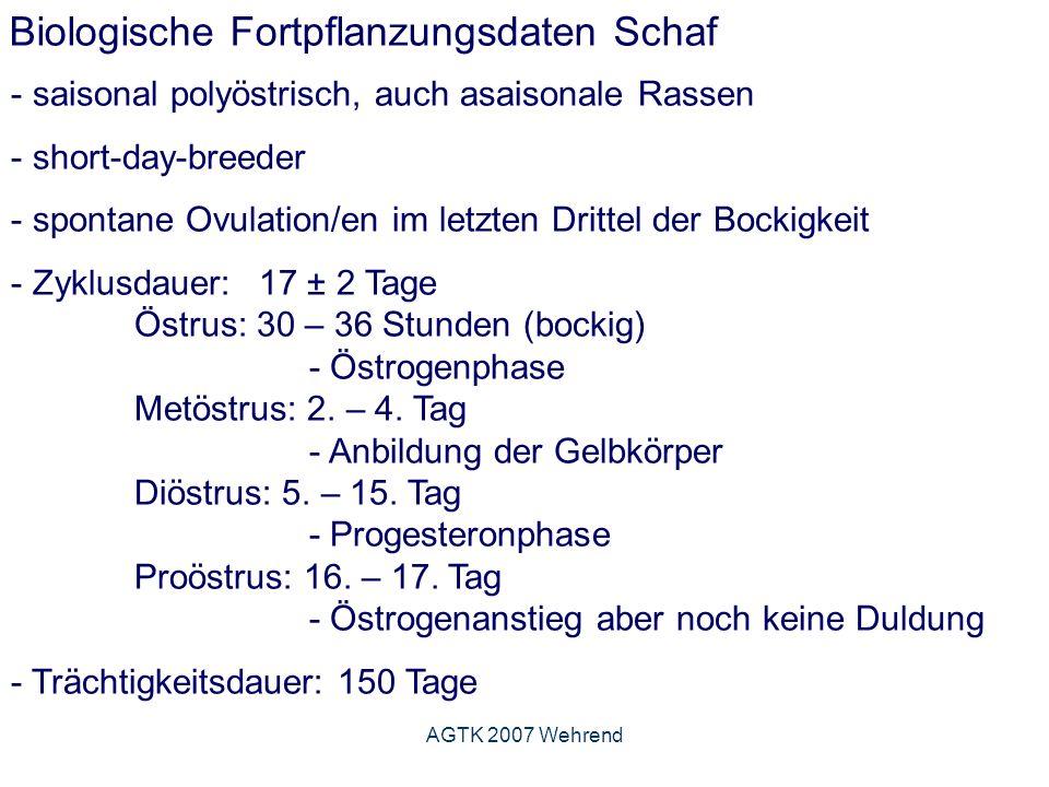 AGTK 2007 Wehrend Biologische Fortpflanzungsdaten Schaf - saisonal polyöstrisch, auch asaisonale Rassen - short-day-breeder - spontane Ovulation/en im letzten Drittel der Bockigkeit - Zyklusdauer: 17 ± 2 Tage Östrus: 30 – 36 Stunden (bockig) - Östrogenphase Metöstrus: 2.